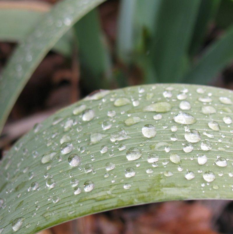 Rain spring 1